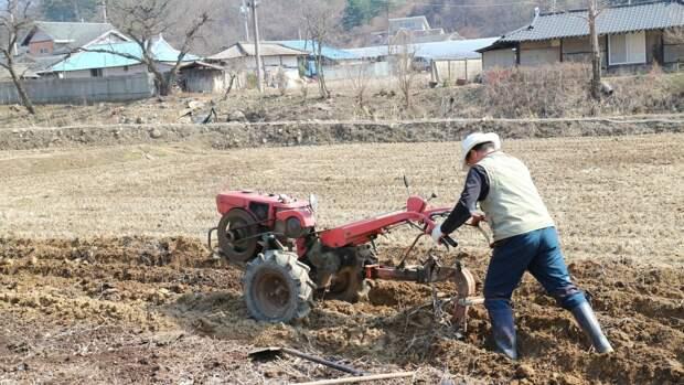 Руководство Саратова потребовало обеспечить продовольственную безопасность региона