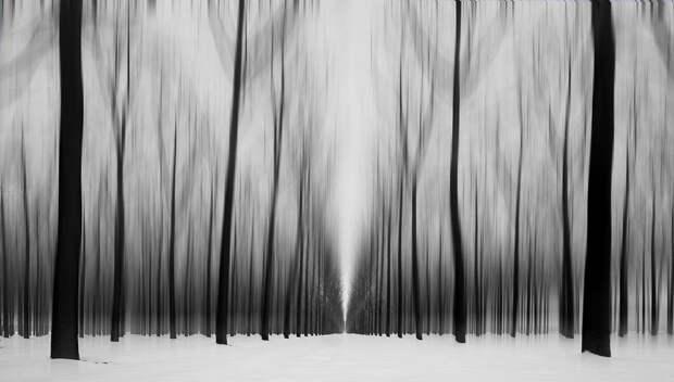 Лучшие фотографии природы фотоконкурса Siena International Photography Awards 2016 17