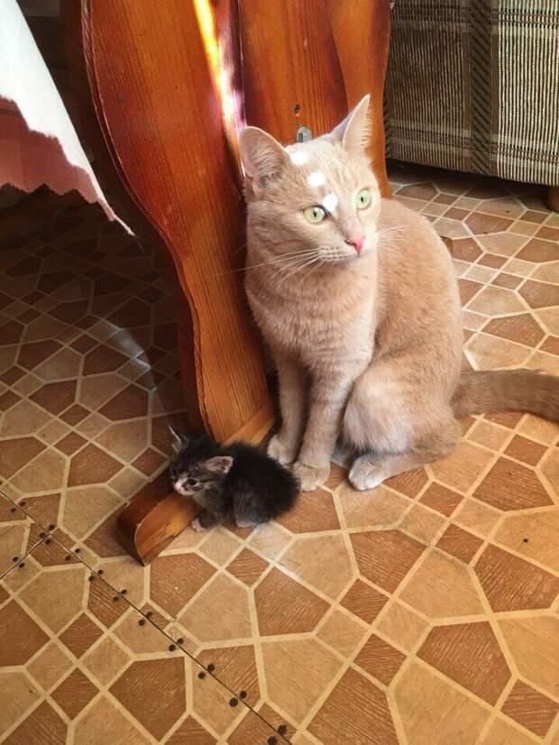 Больше не нужно грызть сухие ветки! Два рыжих кота обрели дом и осчастливили людей)