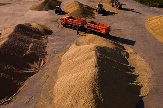 Из российских резервов украли беспрецедентное количество зерна