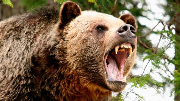 Спрятавшийся в туалете медведь укусил за ягодицу жительницу Аляски