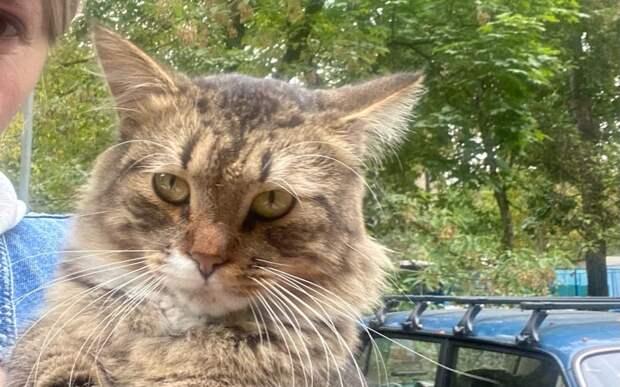 На улице Академика Бочвара потерялся породистый кот