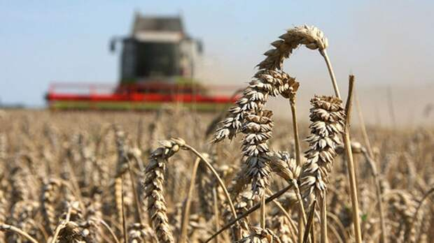 Российские сельхозпроизводители поставили экспортный рекорд
