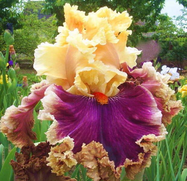 Влюбился в красоту цветов и стал их коллекционировать