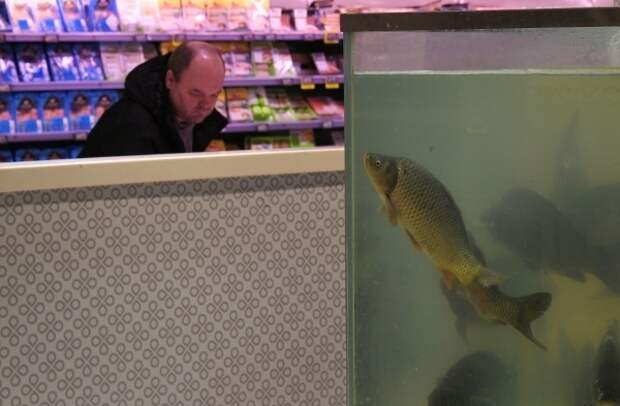 Эксперт перечислил самые опасные для здоровья виды рыб