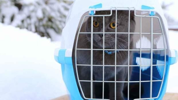 Как выбрать удобную переноску для кота