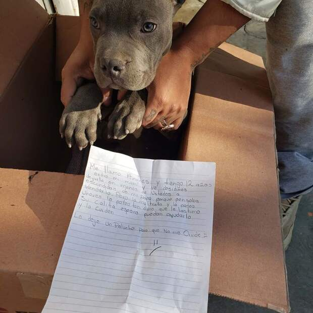 12-летний мальчик отдал любимого щенка в приют, чтобы защитить его от жестокого отца