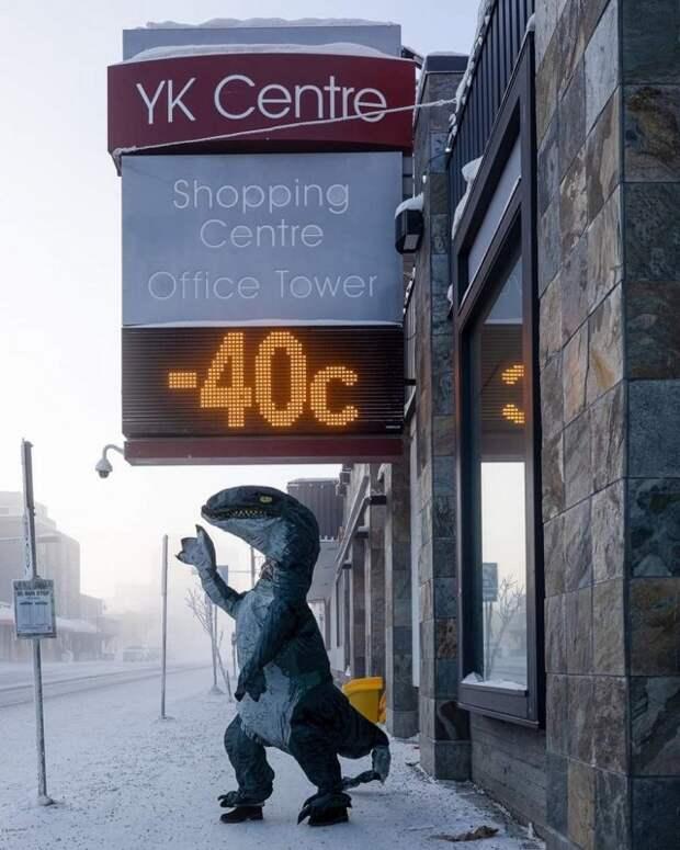 Тем временем в Канаде (22 фото)