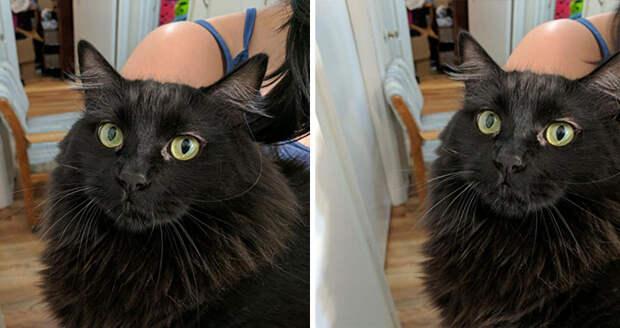 Фото животных до и после того, как их похвалили