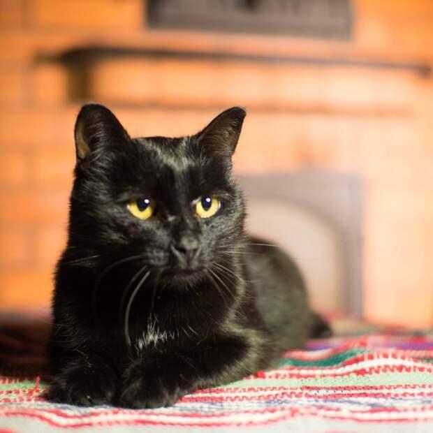Водитель сбил кошку и решил подкинуть ее к дверям клиники волонтер, истории спасения, приют, черная кошка