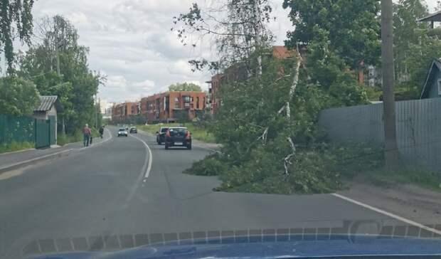 Еще одно дерево обрушилось вПетрозаводске