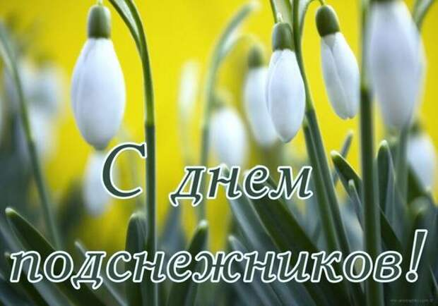 День подснежника: можно ли найти в Томске редкий цветок?