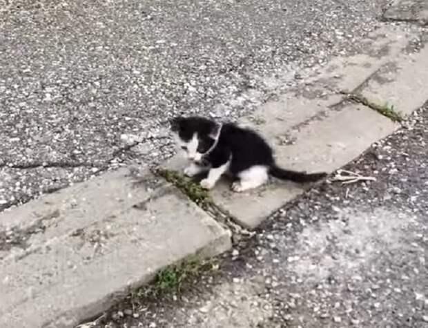 Черно-белый котенок