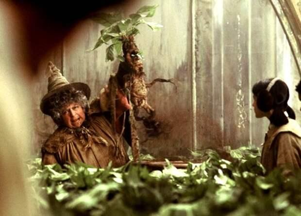 """""""Волшебные"""" или просто полезные растения"""