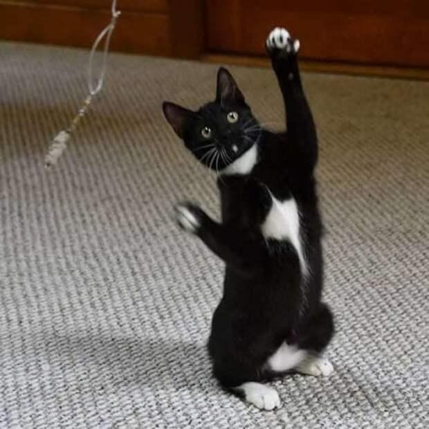 Танцующие кошки