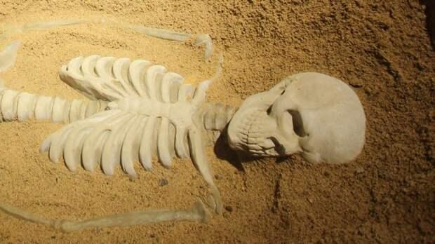 Под Всеволожском рядом с кладбищем нашли скелет в штанах и куртке