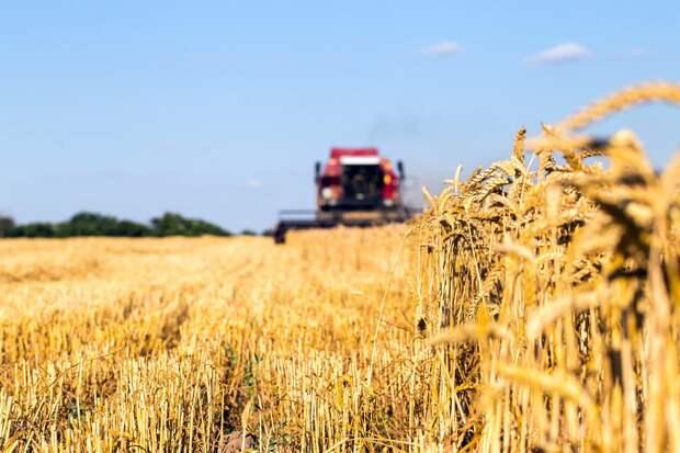 На рынке пшеницы паника.