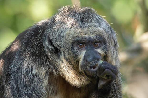 В Хельсинки обнаружили обезьяну бодибилдершу