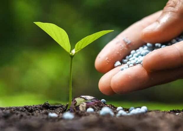 Чем подкормить огурцы для роста в открытом грунте...