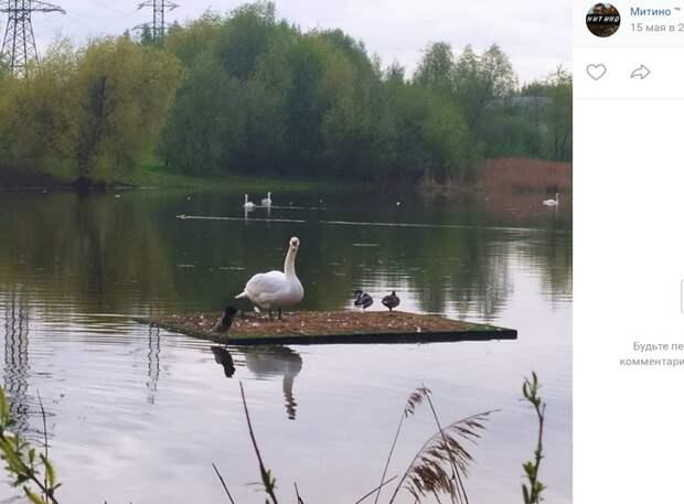 Фото дня: «хозяин» Пенягинского пруда завёл друзей