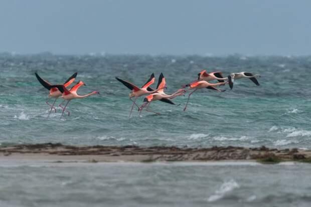 В Крым вновь прилетели розовые фламинго. Фото