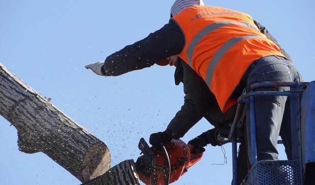 Сотни деревьев икустарников будут вырублены вНижнем Тагиле