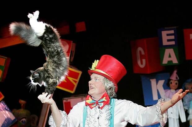 Дрессированная кошка Юрия Куклачева. | Фото: s.hswstatic.com.