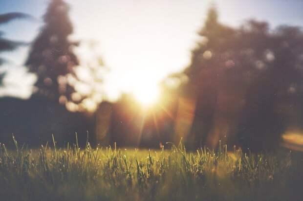 Трава, Газон, Зеленый, Летом, Природа, Поле, Луг, Весна