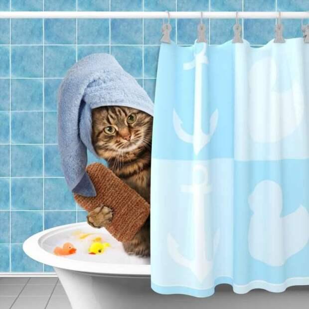 Ванна для любимицы: можно ли купать кошек, и с какой периодичностью надо это делать? (3 фото)