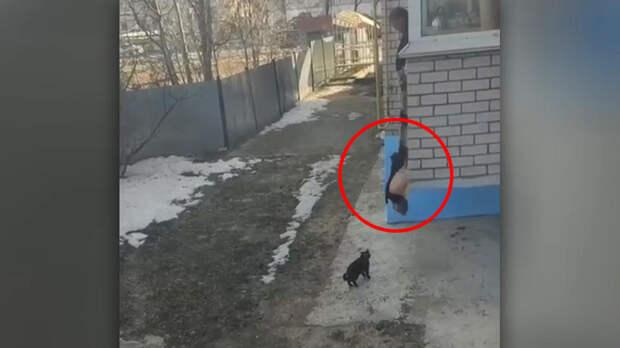 Гениальный способ выгула котов, не выходя из дома, попал на видео
