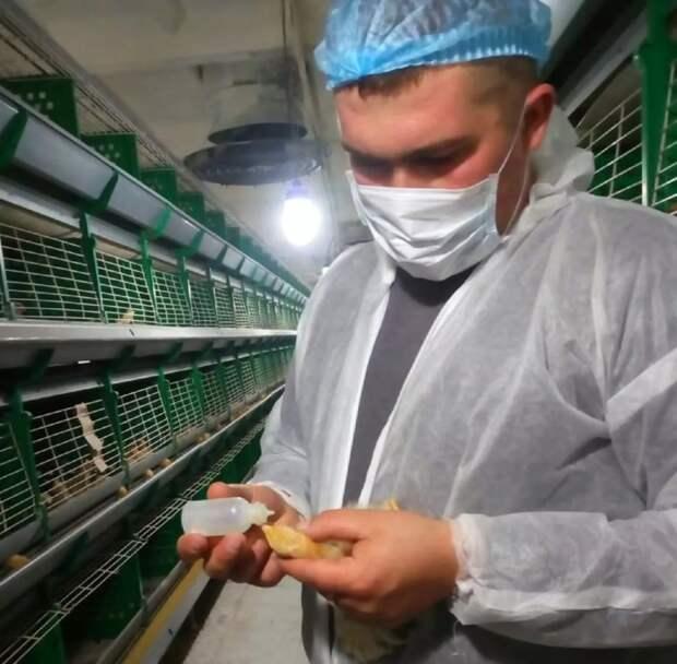 Фото открытых источников   Ветврачи мониторят птицефабрики на инфекции. Правда? А почему результат почти нулевой?