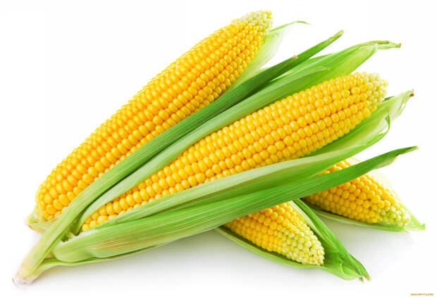 Кукуруза гладкая со сладкими початками