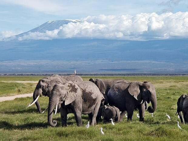 В Кении стартовал первый фестиваль именования слонов