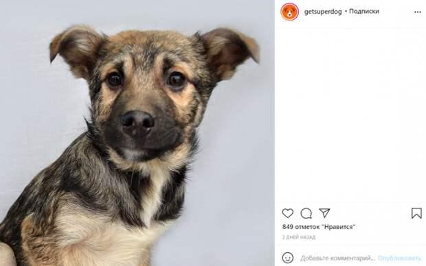 Приют на Машкинском шоссе ищет семью для робкого щенка