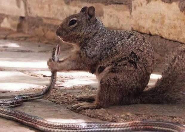 Суровая техасская белка съела змею и покорила интернет