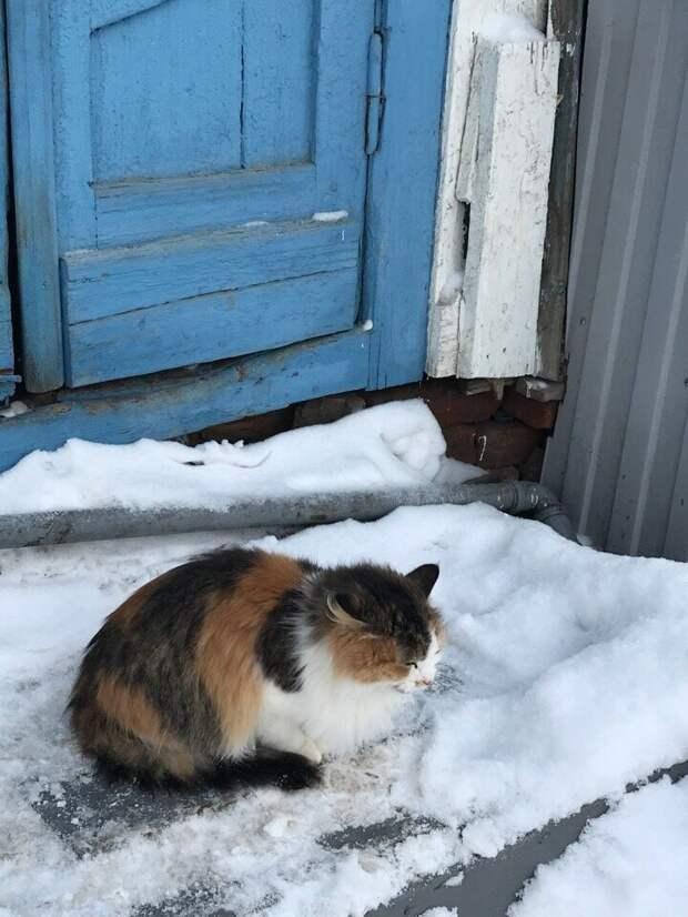 Не каждый любит снег Хвостатые, братья наши меньшие, город, кот, кошка, улица, уличные кошки, эстетика