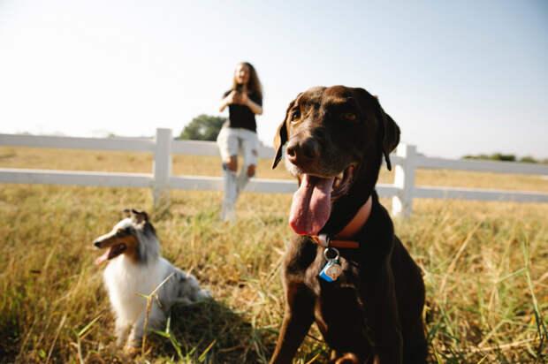 Куда деть домашних животных на время отпуска