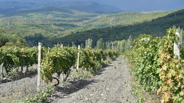 Глава Ростуризма назвала направления развития туризма на Кавказе