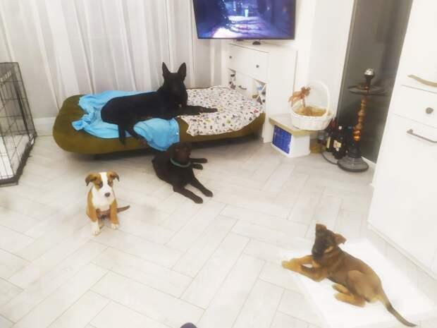 собаки в доме