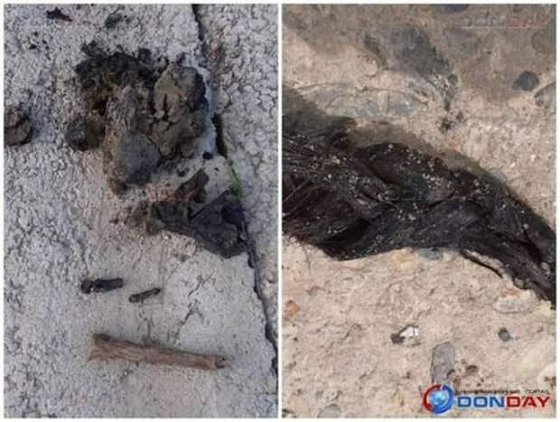 В Сальске поисковики обнаружили останки 5-летней девочки, погибшей в период ВОВ