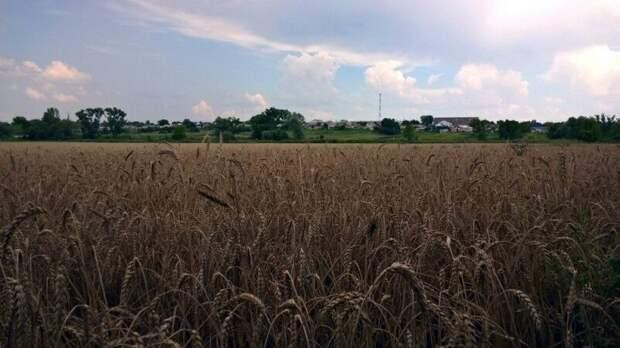 Врио губернатора Белгородской области сообщил о планах увеличить объем ВРП