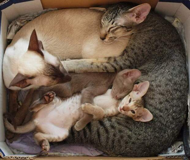 Счастливые кошки-мамы :)