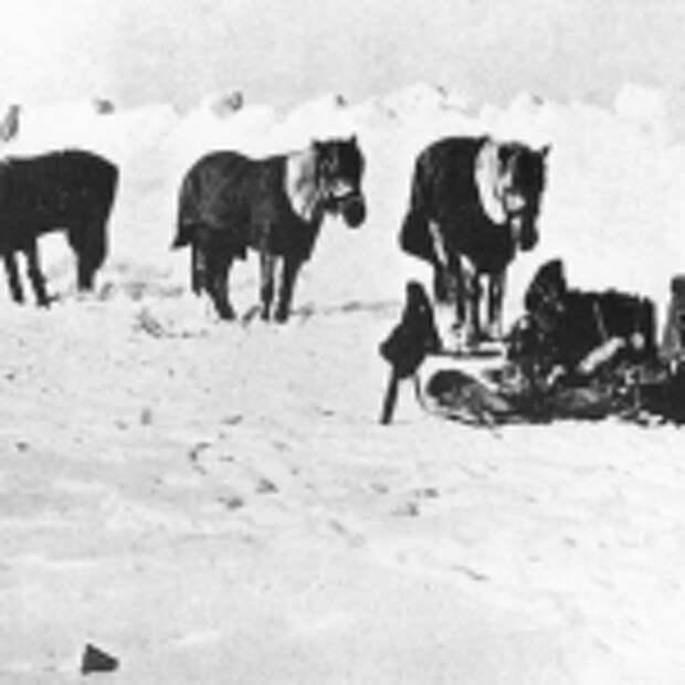 роберт скотт пони экспедиция история