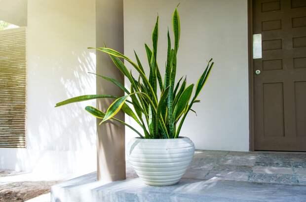9 растений для тех, кого всегда нет дома