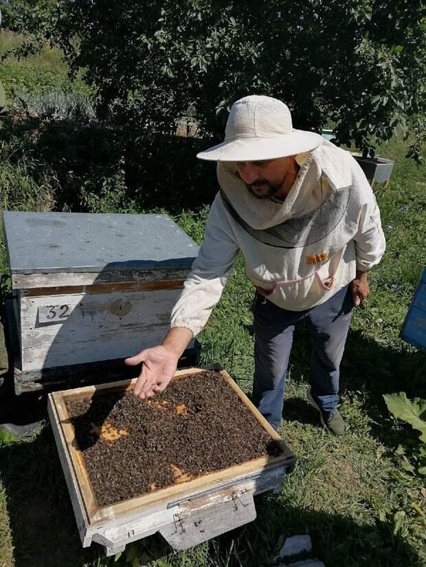Массовый мор пчел произошел в Сарапульском районе Удмуртии
