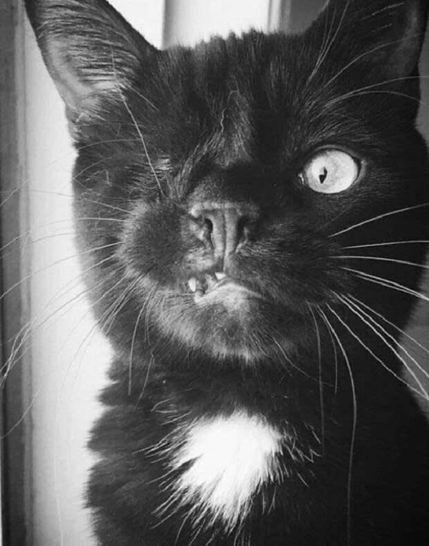 Олин кот Пират