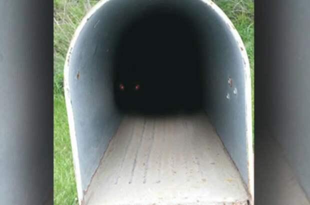 Из недр почтового ящика на женщину уставились два горящих красных глаза
