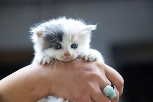 Ветеринар перечислил опасности, которые подстерегают котенка в доме