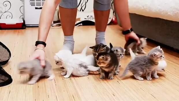 Как выстроить 10 маленьких котят? Очень позитивное видео!