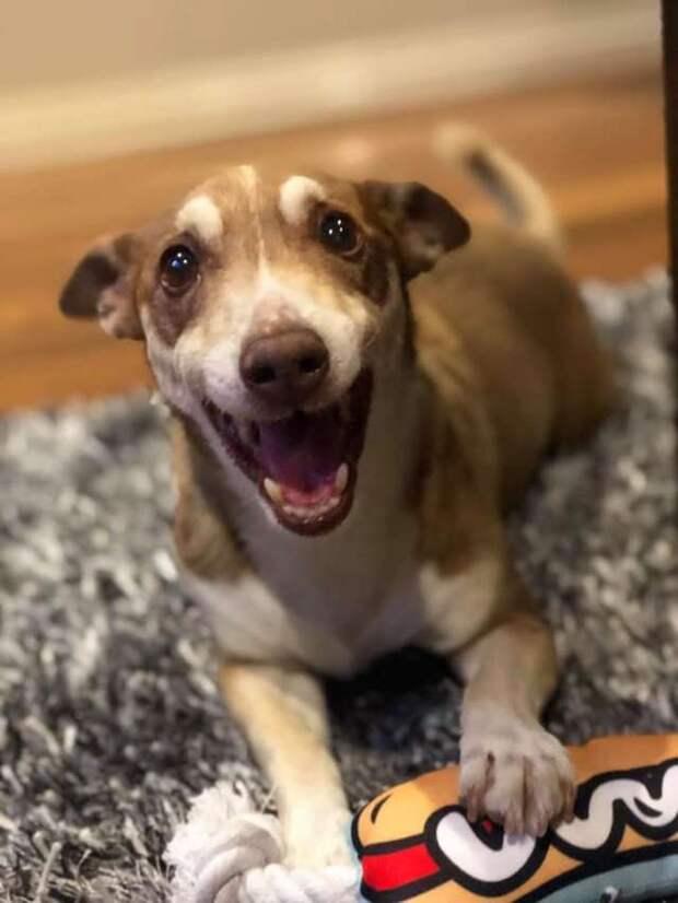 Для счастья нужно совсем чуть-чуть! Пожилой пёс очень рад, что кто-то помнит о его Дне рождения
